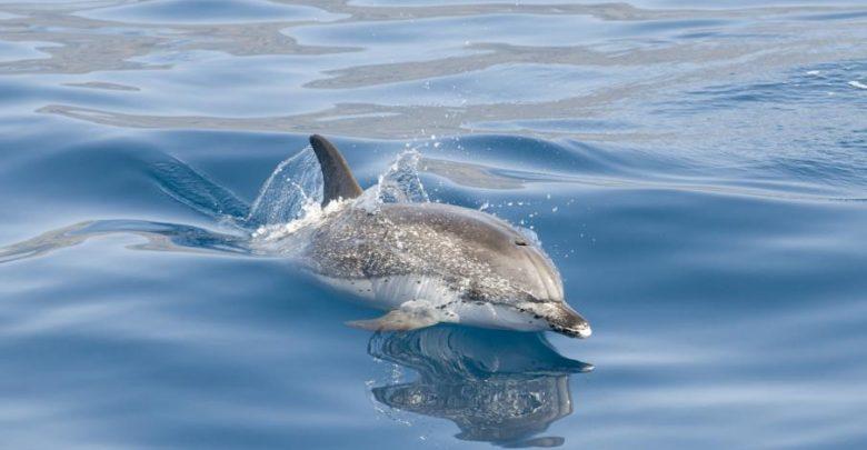 Photo of Sightseeing Kanaren – Von Flipper bis Pottwal