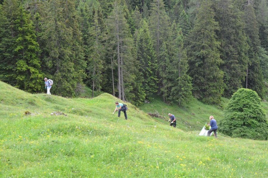 (c)Biosphärenregion Berchtesgadener Land - Almschwenden