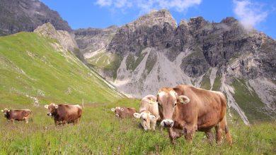 Photo of Der nackige Arlberg im Sommer: Auch ohne Schnee einfach traumhaft