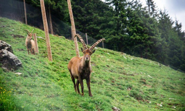 (c)Wildlife-Trail in Saalbach-Hinterglemm