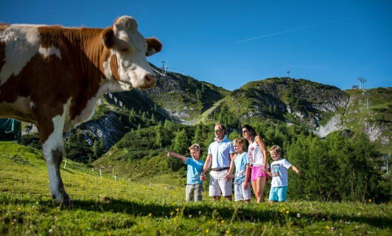 Photo of Zauchensee – Auf Du und Du mit der Kuh beim Kuhparkuhr