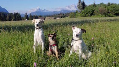 Photo of Wandern mit Hund – Das solltet Ihr beachten