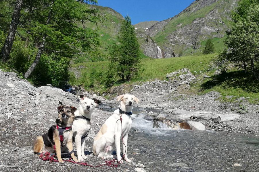 (c)be-outdoor.de - Wandern mit Hund(en)
