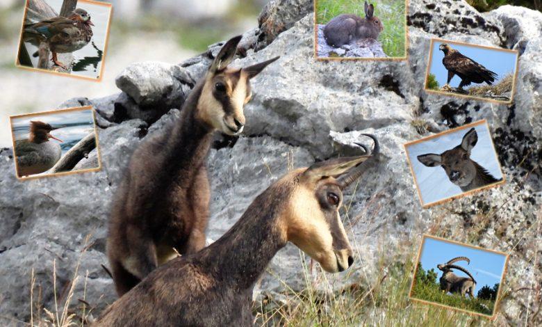 (c)be-outdoor.de - Fotomontage Bilderkalender Wildtiere 2021 - Wildes Bayern e.V.
