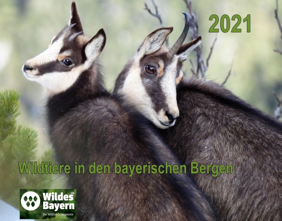 (c)Wildes Bayern e.V. - Fotokalender 2021