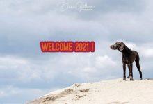Photo of Wenn es knallt und zischt – Tipps für Silvester mit Hund