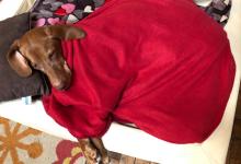 Photo of Husten, Schnupfen und Co. – wenn der Hund erkältet ist