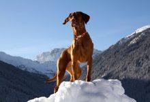 Photo of Mit Hund in den Winterurlaub
