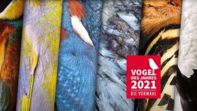 Photo of Vogel des Jahres – LBV und NABU starten Wahl