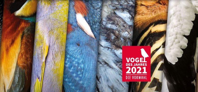 (c)LBV - Nabu - Wahl zur Vogel des Jahres 2021