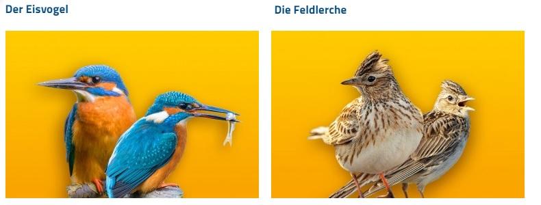 (c)LBV - Nabu - Endspurt - Vogel des Jahres 2021