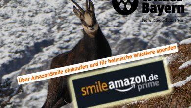 Photo of AmazonSmile – Beim Onlinekauf Gutes tun