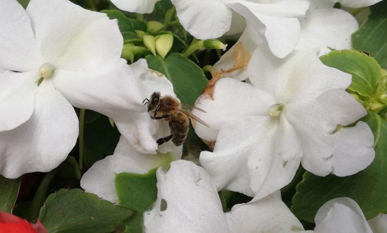 Photo of Katadyn Bee Patch – Insektenpflaster