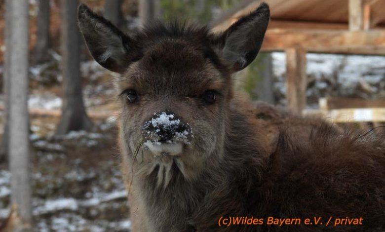 Photo of #Schneggerl – Ein Waisenkind im Schnee