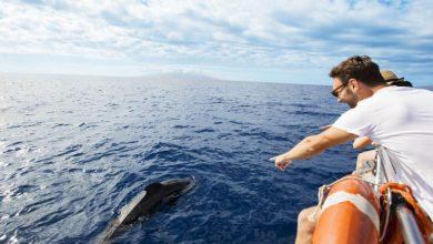 Photo of Teneriffa – erstes Walschutzgebiet Europas