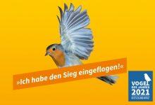 Photo of Rotkehlchen gewinnt Wahl zum Vogel des Jahres 2021