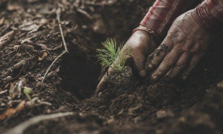 Photo of Ausgezeichnet – tentree offiziell klimaneutral!