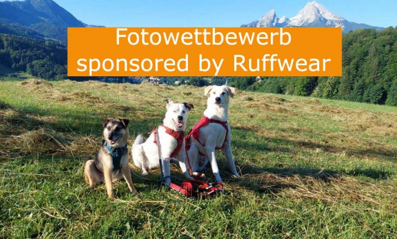Photo of Fotowettbewerb – sponsored by Ruffwear