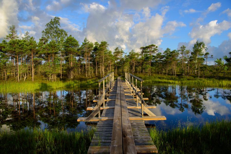 Nigula Naturschutzgebiet_©Visit Estonia Sven Zacek