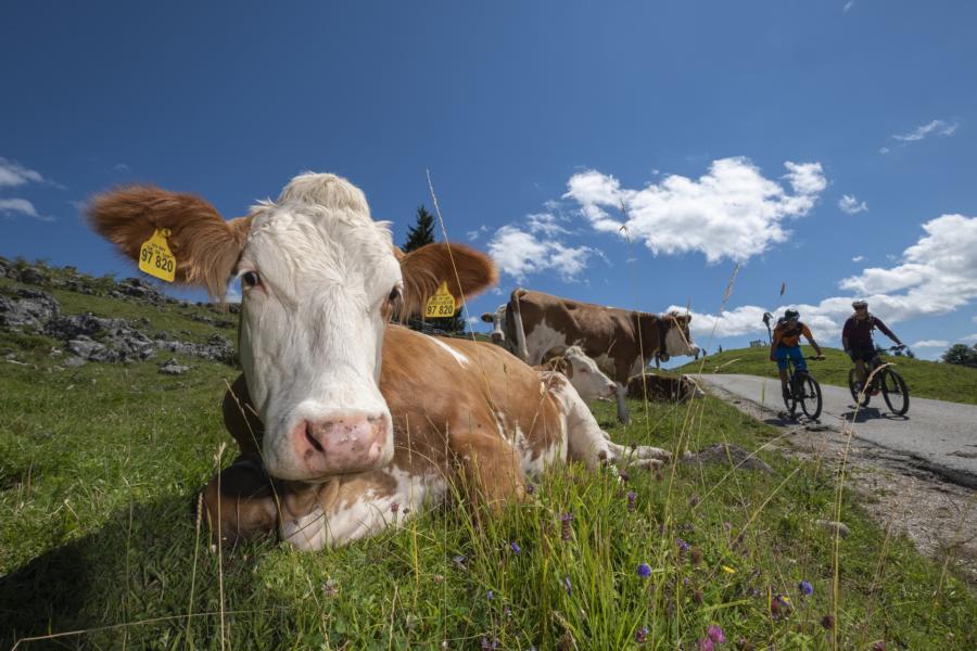 (c)Chiemsee-Chiemgau Tourismus e.V.- AK